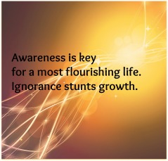 awareness haiku